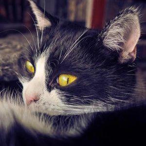 Diabète chez le chat - Symptômes, diagnostic et traitement