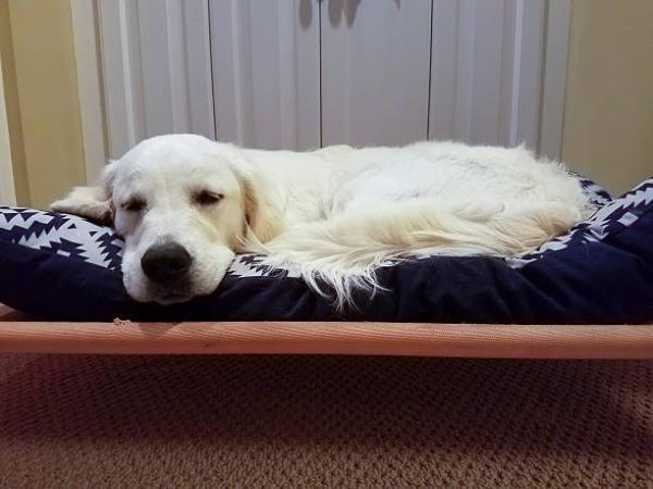 Entérite chez le chien - Symptômes et traitement