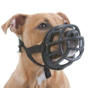 Est-ce que laisser le chien seul à la maison est bien muselé?