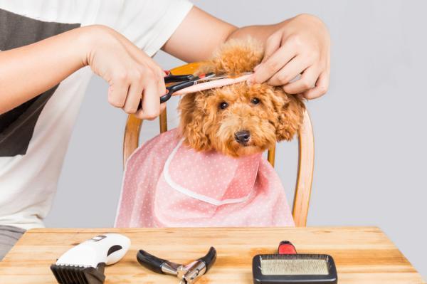 Est-il bon de couper les poils des chiens en été?