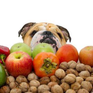 Fruits et légumes interdits pour chiens