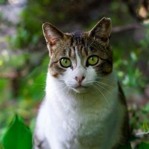 Homéopathie pour chats