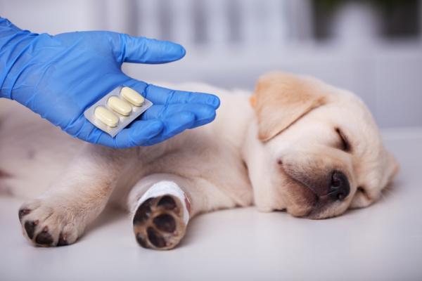 Ibuprofène pour chiens - POSOLOGIE, TOXICITÉ et UTILISATIONS