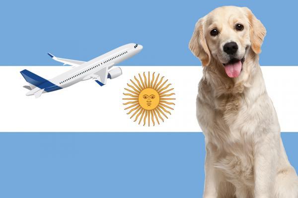 Indications pour voyager avec un chien en Argentine