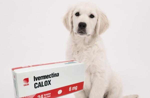 Ivermectine pour chiens - Posologie et utilisations
