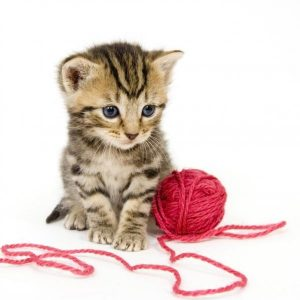 Jouets idéaux pour les petits chats