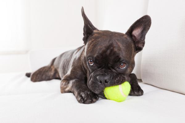 Jouets non recommandés pour les chiens