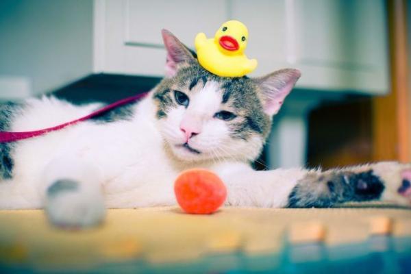 Jouets pour chats adultes, lequel choisir?