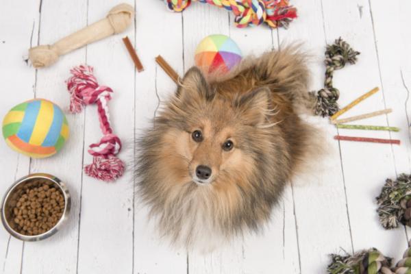 Jouets pour chiens hyperactifs