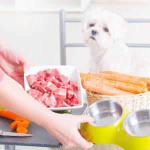 La viande crue est-elle bonne pour les chiens?