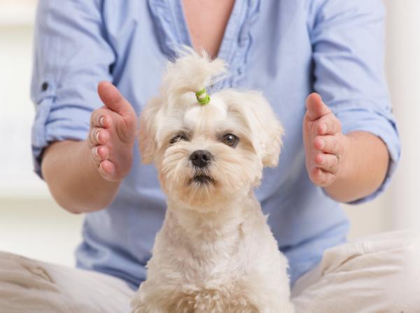 Le Reiki pour les animaux fonctionne?