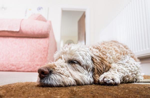 Le chien peut-il rester seul à la maison toute la journée?