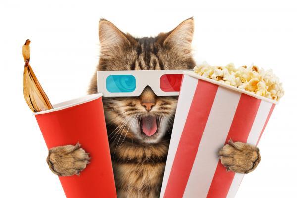 Les 10 chats les plus célèbres du cinéma, vous en souvenez-vous?