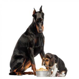 Les 15 meilleurs aliments pour chiens sur le marché