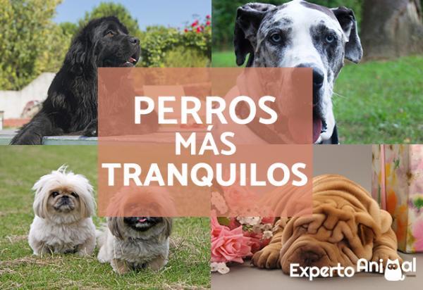 Les 15 races de chiens CALMEST