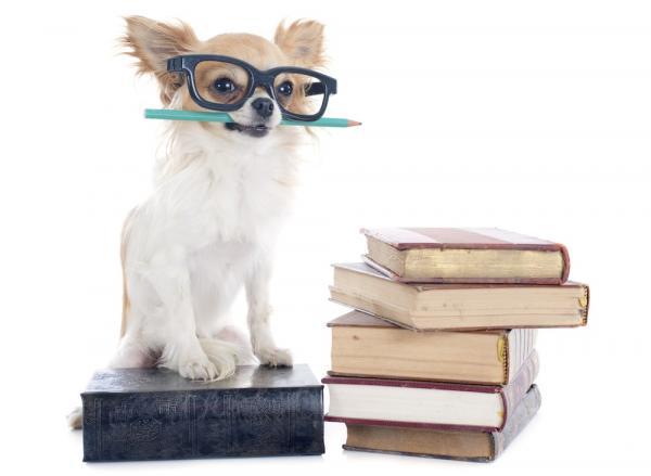 Les 5 chiens les plus intelligents du monde