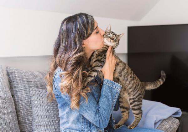 Les chats aiment-ils s'embrasser?