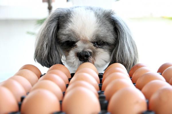 Les chiens peuvent-ils manger des œufs?