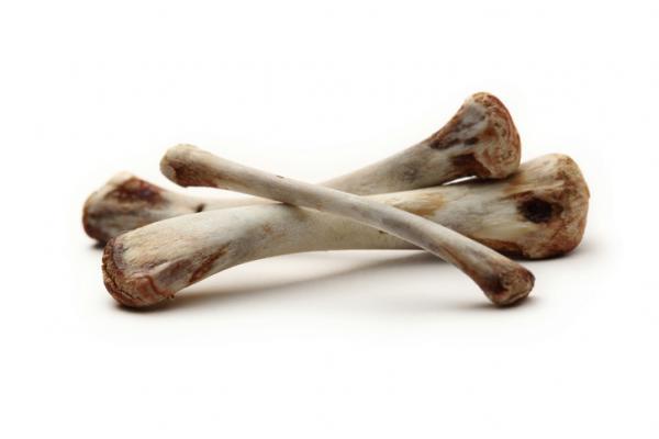 Les chiens peuvent-ils manger des os cuits?