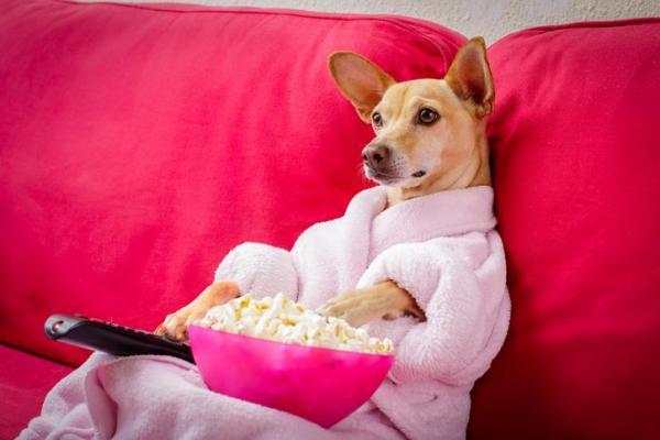 Les chiens peuvent-ils manger du pop-corn?