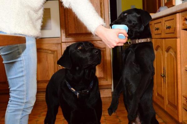 Les chiens peuvent-ils manger du yaourt?