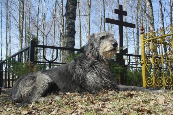Les chiens prédisent-ils la mort?
