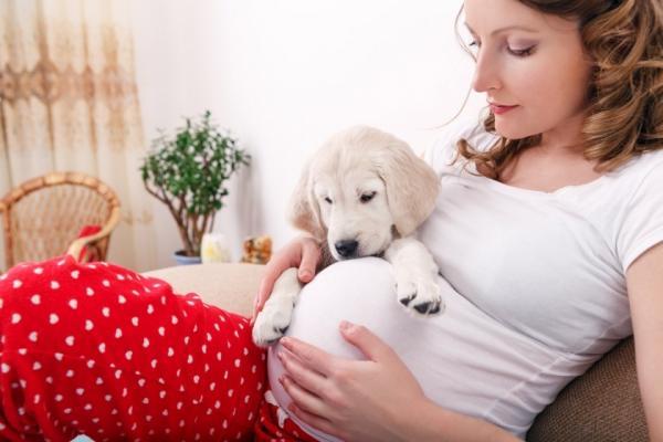 Les chiens prédisent-ils une grossesse?