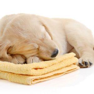 Les chiens rêvent-ils aussi?