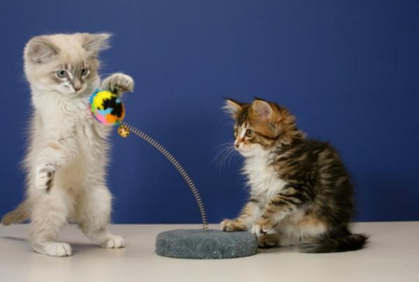 Les jouets pour chats les plus drôles