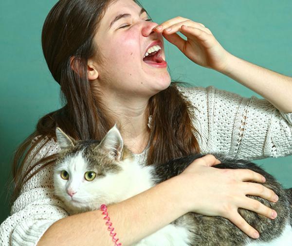 Les meilleures races de chats pour les personnes allergiques