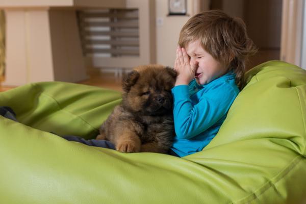 Les meilleures races de chiens pour les personnes allergiques