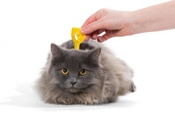 Les meilleurs produits pour les chats vermifuges