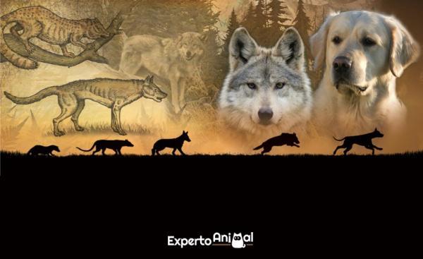 L'origine du chien - ascendance, domestication et races de chiens
