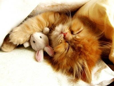 Mon chat dort beaucoup - est-ce normal?