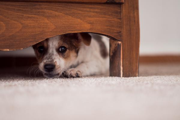 Mon chien a peur, que faire?