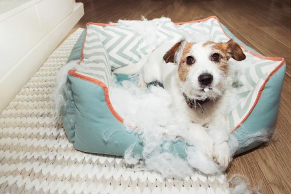 Mon chien mord son lit