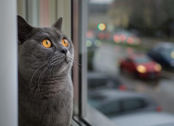 Noms de chats anglais et leurs significations