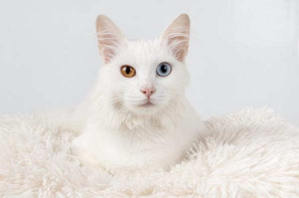 Noms pour chats blancs + 300 idées pour mâles et femelles