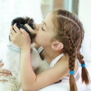 Petits chiens idéaux pour les enfants