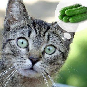 Pourquoi les chats ont-ils peur des concombres?
