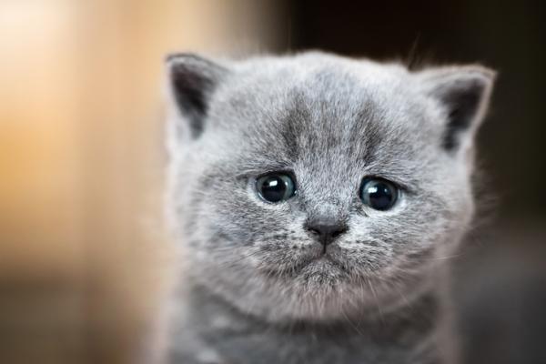 Pourquoi les chats pleurent-ils?