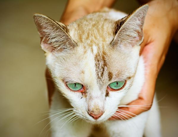 Pourquoi mon chat a-t-il les yeux rouges?