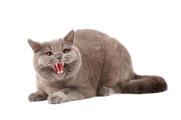 Pourquoi mon chat m'attaque-t-il?