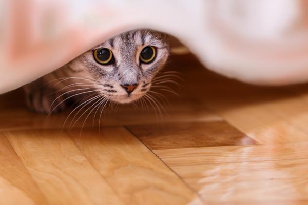 Pourquoi mon chat se cache-t-il quand les gens viennent?