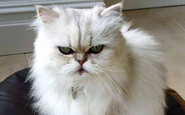 Pourquoi mon chat urine-t-il partout?