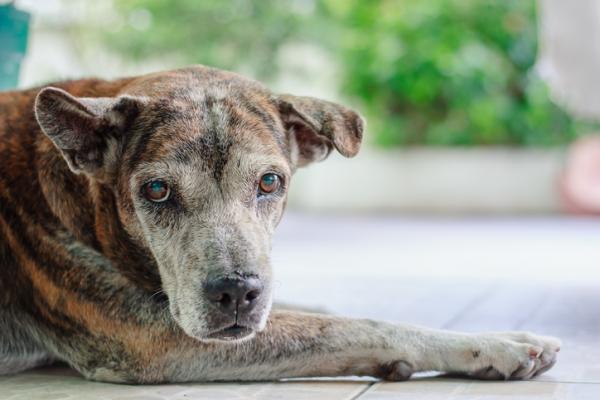 Problèmes de REIN chez les chiens - Maladies, causes et symptômes