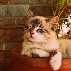 Puis-je baigner un chat malade?