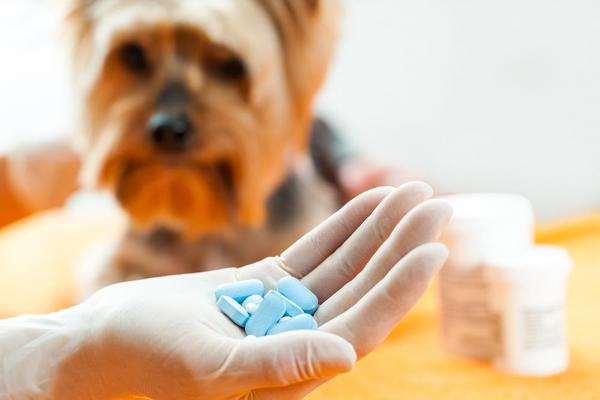 Puis-je donner des antibiotiques à mon chien?