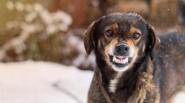 Que faire si un chien atteint de rage mord une personne?