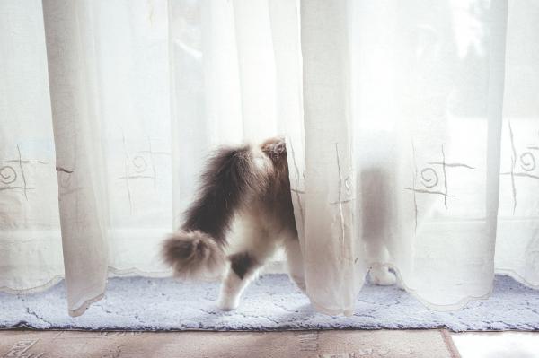 Que font les chats lorsqu'ils sont seuls?